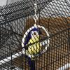 PawHut Metal Bird Cage w/ Plastic Perch Food Container Swing Ring Handle Small Black(m-8)