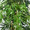 Outsunny Bambú Artificial 150cm con Maceta Árbol Planta Sintética Realista Decorativa para Casa Jardín Oficina Ø18x150 cm Verde(m-8)